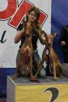фараонова собака (щенки)