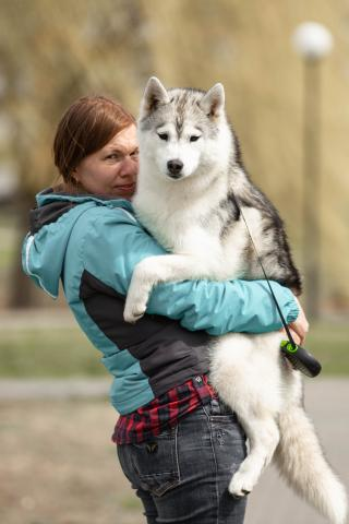 Beautiful girl Siberian Husky - 3/4